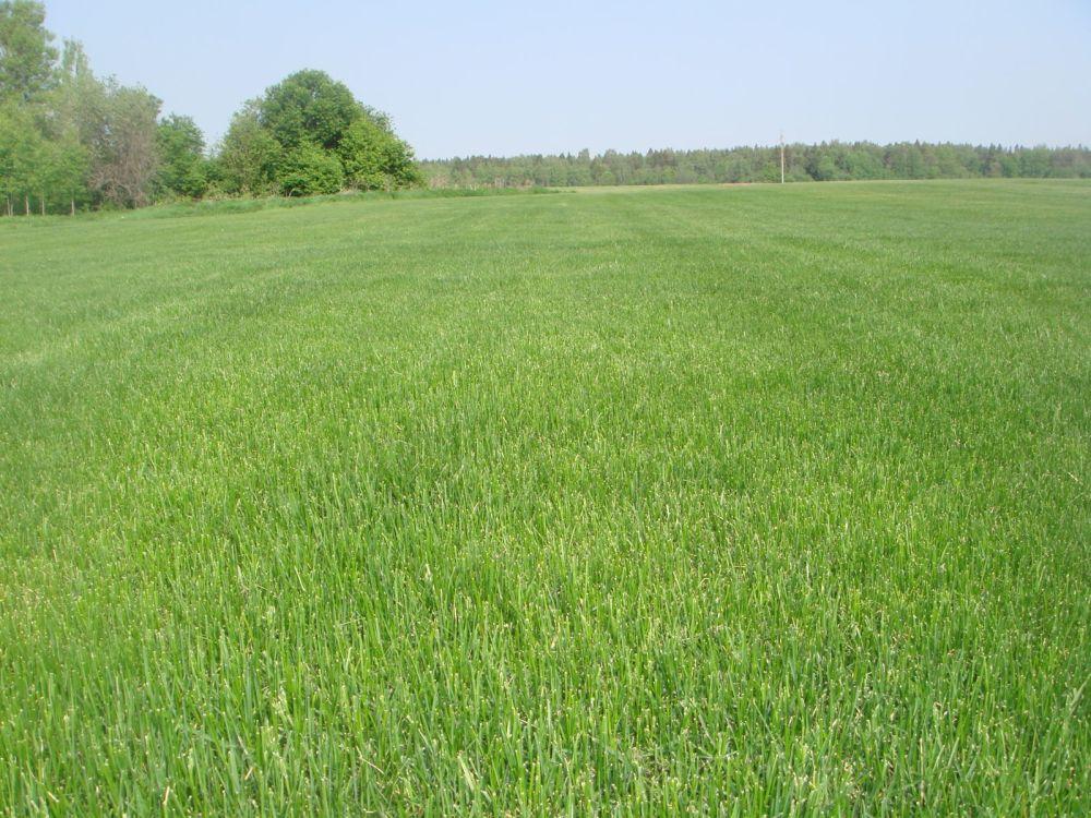поля для производства газона