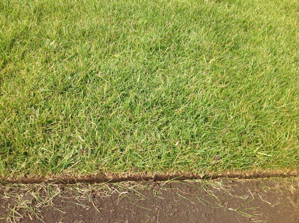 качество рулонного газона